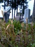 佐川官兵衛の墓